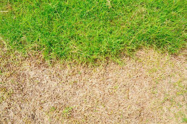 Was tun, wenn der Rasen eine Hitzeschaden hat?